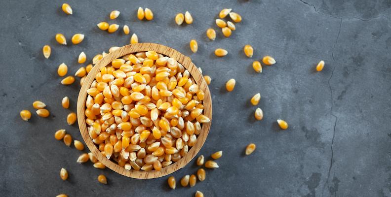 Så odlar du eget prydnadsgräs – av popcornkärnor!